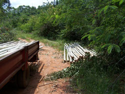Illegally harvested timber poles