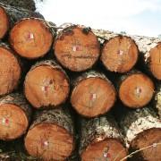 wood-pic