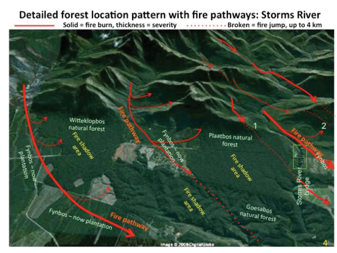 Knysna Fire Map.Southern Cape Forests Survive Largely Unchanged For Centuries Sa