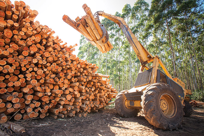 masonite-timber-loading