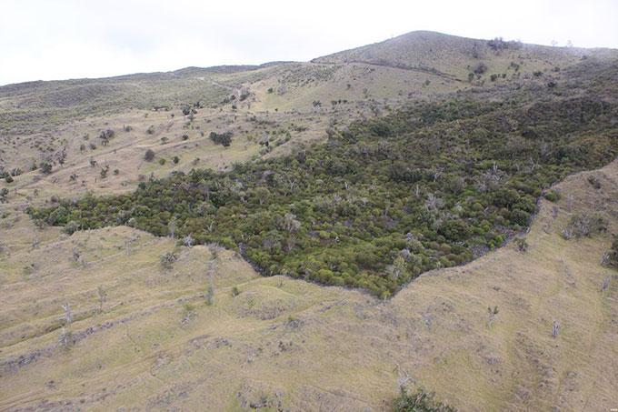1200px-auwahi_dryland_forest