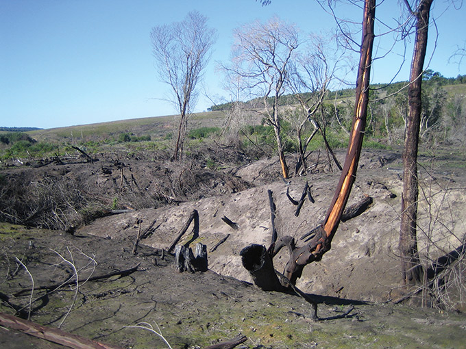 IMG_5447-DEGRADED-WETLAND-IN-THE-BASIN-AFTER--PARTIAL-WATTLE-ERADICATION-AND-A-FIRE-THROUGH-THE-AREA